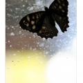 vlinder-3-600x400