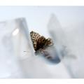 vlinder-1-600x400