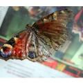 vlinder-4-600x400